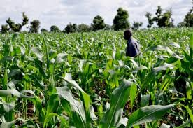 Impact of Agric Mechanization on Nigeria's Economic Growth