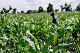 Impact of Agric Mechanization on Nigeria's Economic Growth